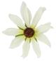 Karin's Garden - Silk Flower motif hairsticks,headbands, pony elastics & varied accessories. - HairBoutique.com Marketplace