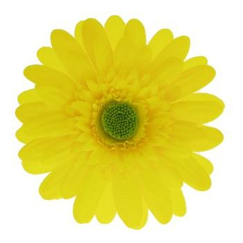 Karen Marie - Le Fleur Collection - Medium Daisy Clip - Yellow (1)