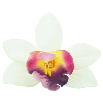 Karen Marie - Le Fleur Collection - Large Cymbidium Orchid - White w/Fuschia (1)