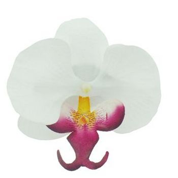 Karen Marie - Le Fleur Collection - Medium Phalaenopsis Orchid Clip - White w/Burgundy (1)